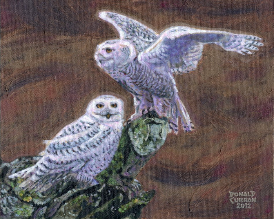 """Snow Owls"" original fine art by Donald Curran"