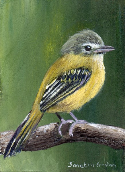 """Yellow Olive Flatbill ACEO"" original fine art by Janet Graham"