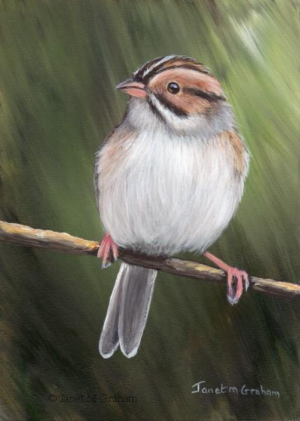 """""""Clay Coloured Sparrow No 3"""" original fine art by Janet Graham"""