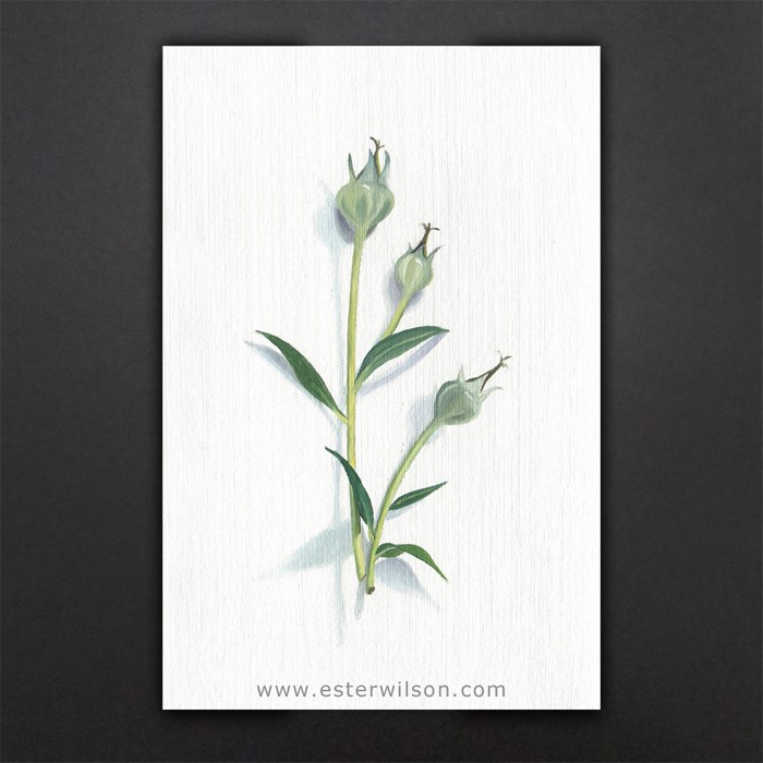 """Plant Pods"" original fine art by Ester Wilson"