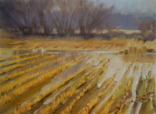 """""""Trumpeter fields of Whatcom county landscape oil painting"""" original fine art by Robin Weiss"""