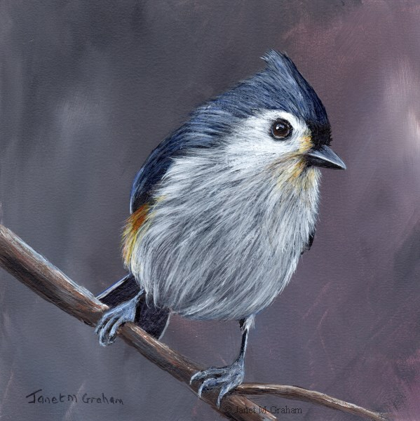 """Tufted Titmouse No 12"" original fine art by Janet Graham"