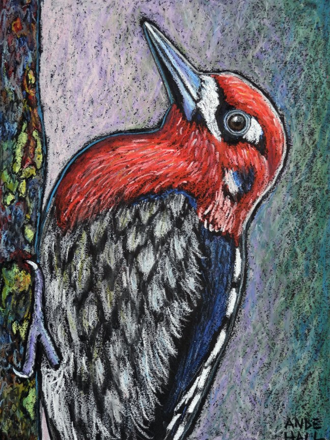 """""""Red Breasted Sapsucker"""" original fine art by Ande Hall"""