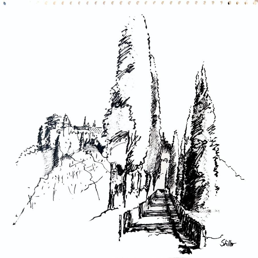 """""""2831 Bernardi Cypresses"""" original fine art by Dietmar Stiller"""