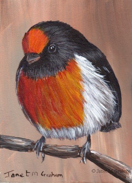 """""""Red Capped Robin ACEO"""" original fine art by Janet Graham"""