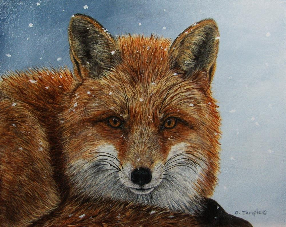 """Winter Fox"" original fine art by Catherine Temple"