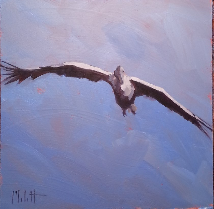 """Pelican in Flight Original Daily Oil Painting"" original fine art by Heidi Malott"