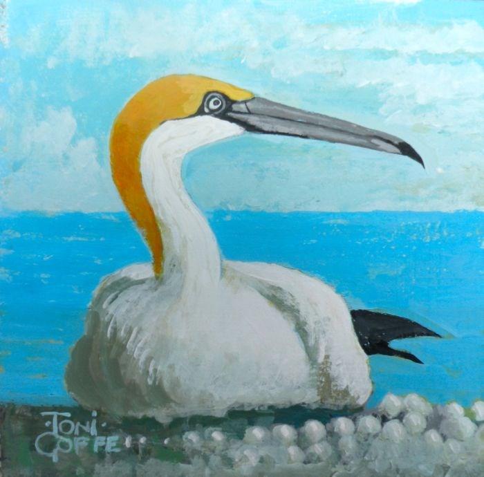 """Gannet"" original fine art by Toni Goffe"