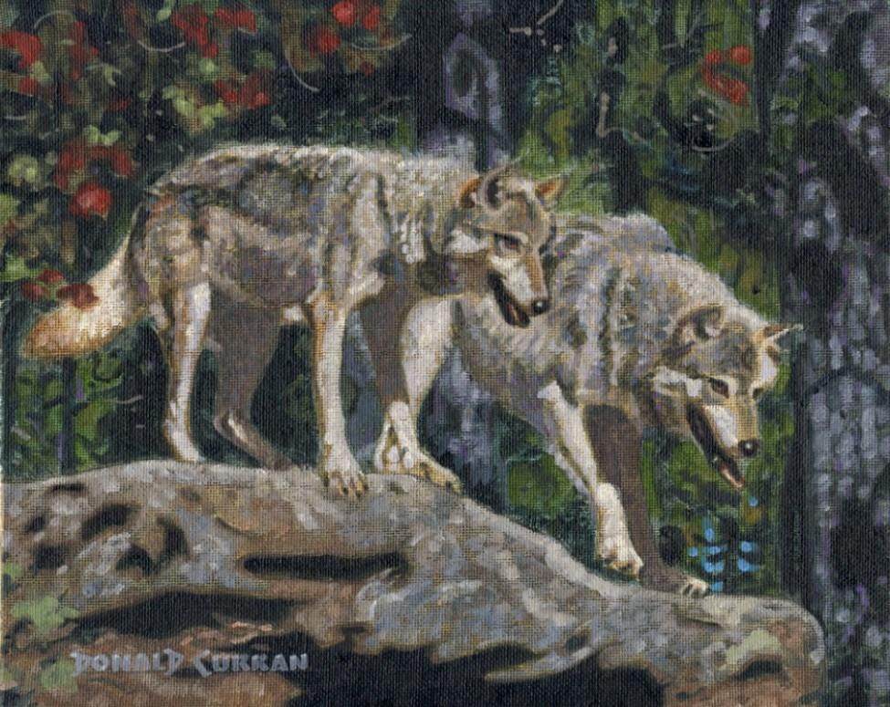 """Wolves"" original fine art by Donald Curran"