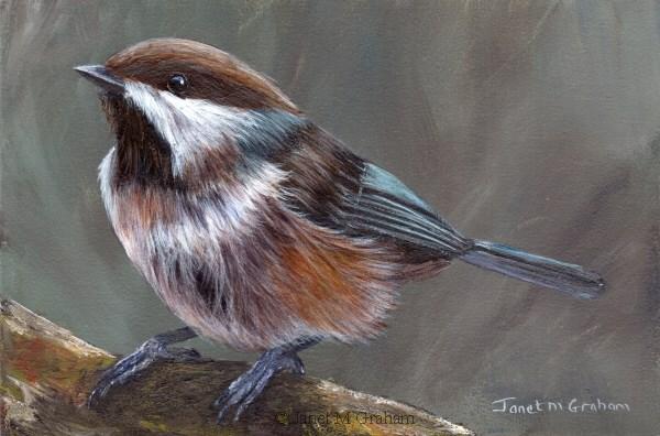 """""""Boreal Chickadee No 2"""" original fine art by Janet Graham"""