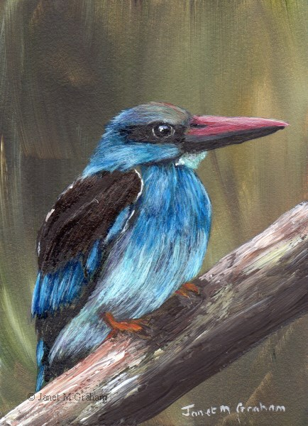 """Blue Breasted Kingfisher ACEO"" original fine art by Janet Graham"