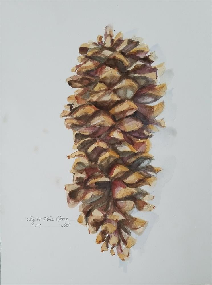 """Sugar Pine Cone"" original fine art by Jean Krueger"