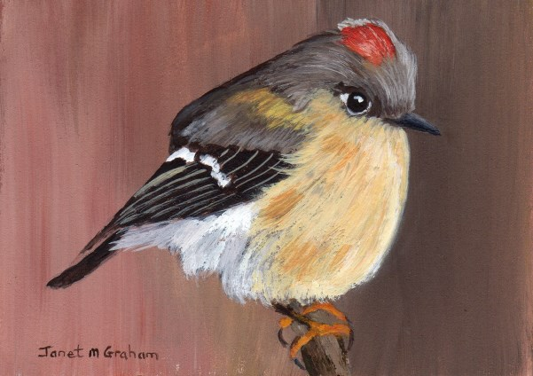 """""""Ruby Crowned Kinglet ACEO"""" original fine art by Janet Graham"""