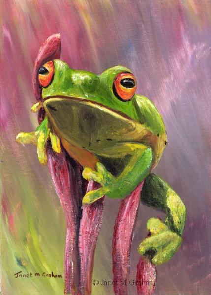 """Green Tree Frog"" original fine art by Janet Graham"