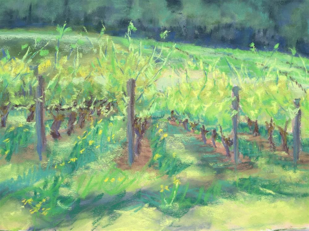 """Abbey Ridge Vineyard"" original fine art by Mary Weil"