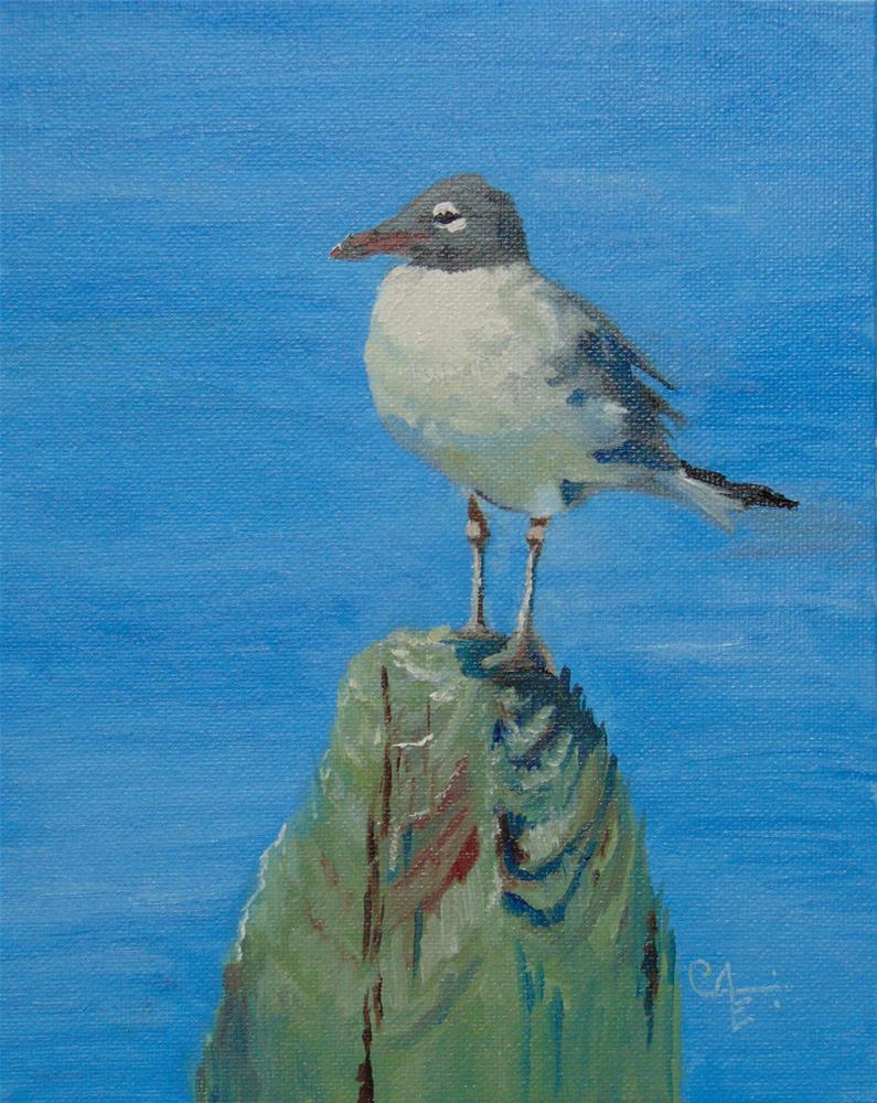 """""""Laughing Gull"""" original fine art by Catherine Kauffman"""