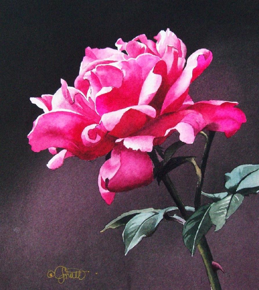 """Very Berry Rose"" original fine art by Jacqueline Gnott, TWSA, WHS"