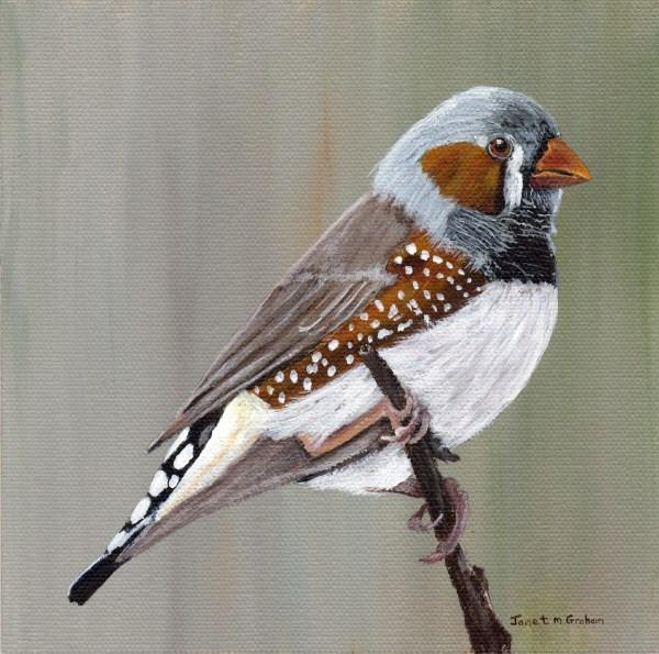 """Zebra Finch"" original fine art by Janet Graham"
