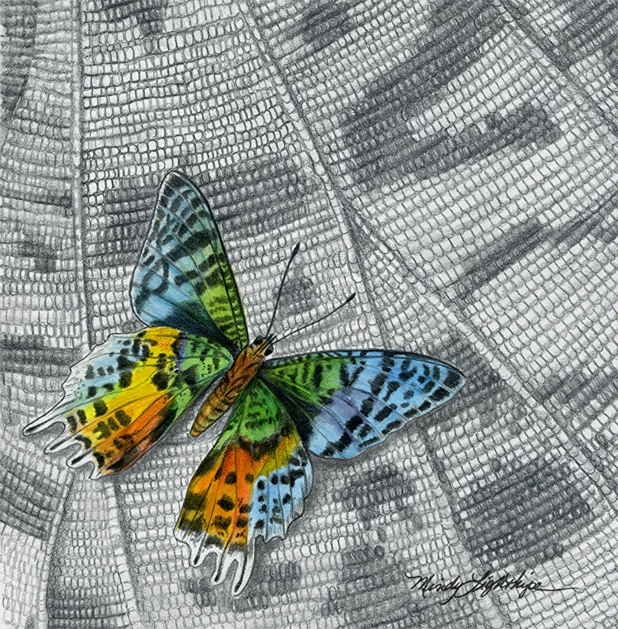 """Wildlife Art Insect, Nature MADAGASCAN SUNSET MOTH The Art of Nature, Fine Art  by Mindy Lighthipe"" original fine art by Mindy Lighthipe"