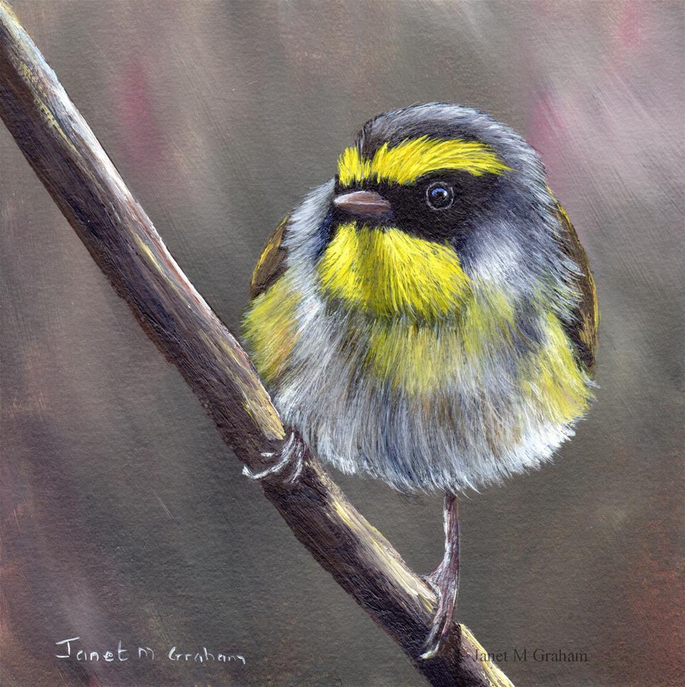 """""""Black Faced Warbler"""" original fine art by Janet Graham"""
