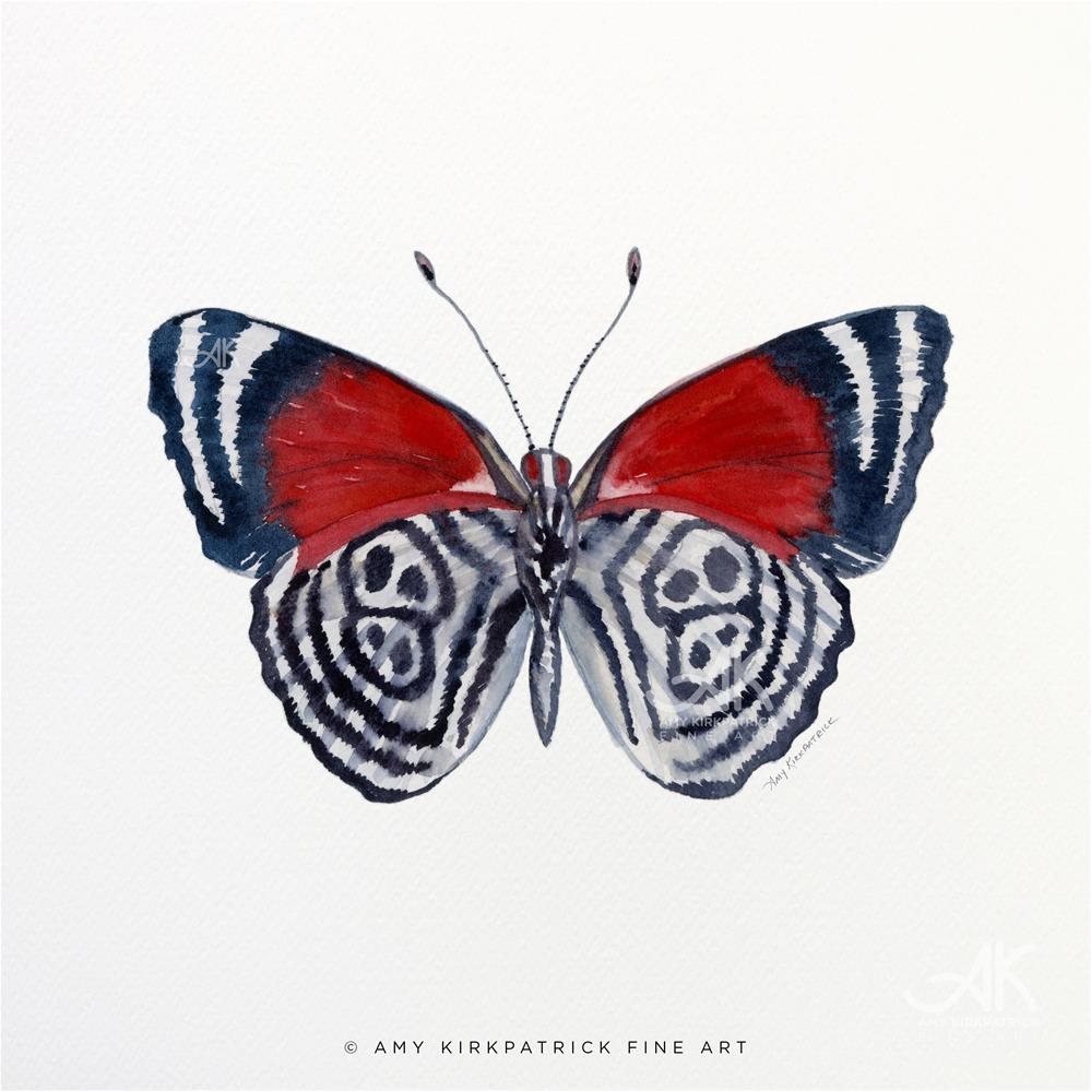 """""""#37 Diaethria Clymena #0346"""" original fine art by Amy Kirkpatrick"""