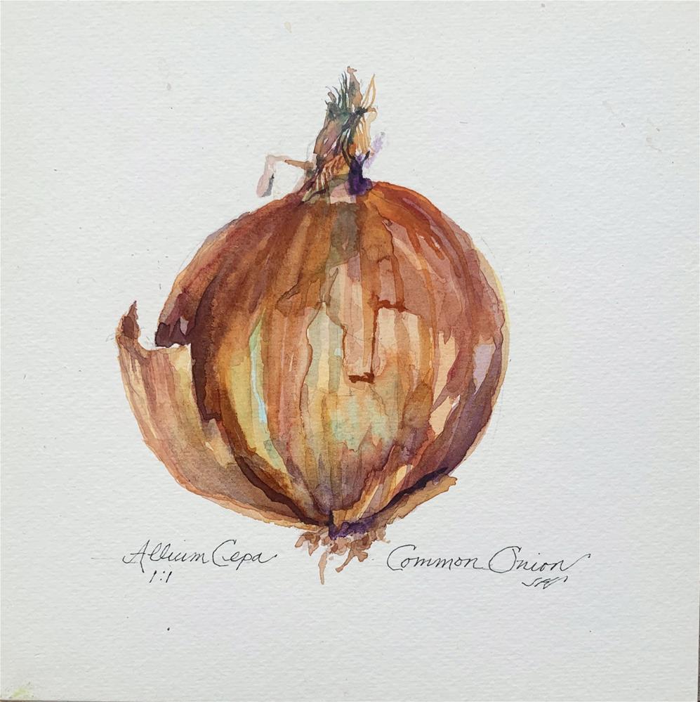 """Allium Cepa -Common Onion"" original fine art by Jean Krueger"