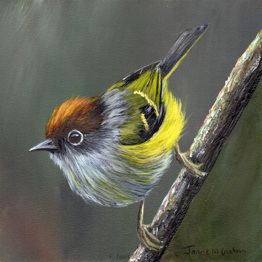 """""""Chestnut Crowned Warbler"""" original fine art by Janet Graham"""