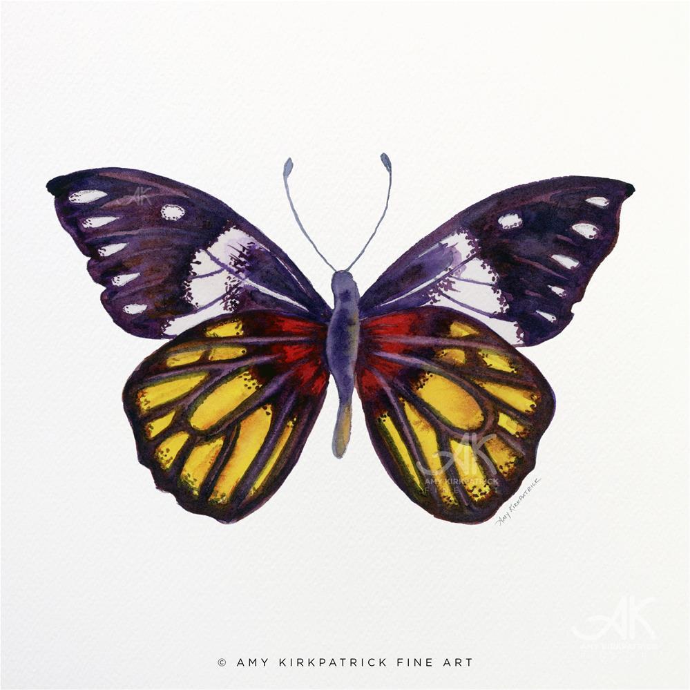 """#31 Delias Henningia Butterfly #0340"" original fine art by Amy Kirkpatrick"