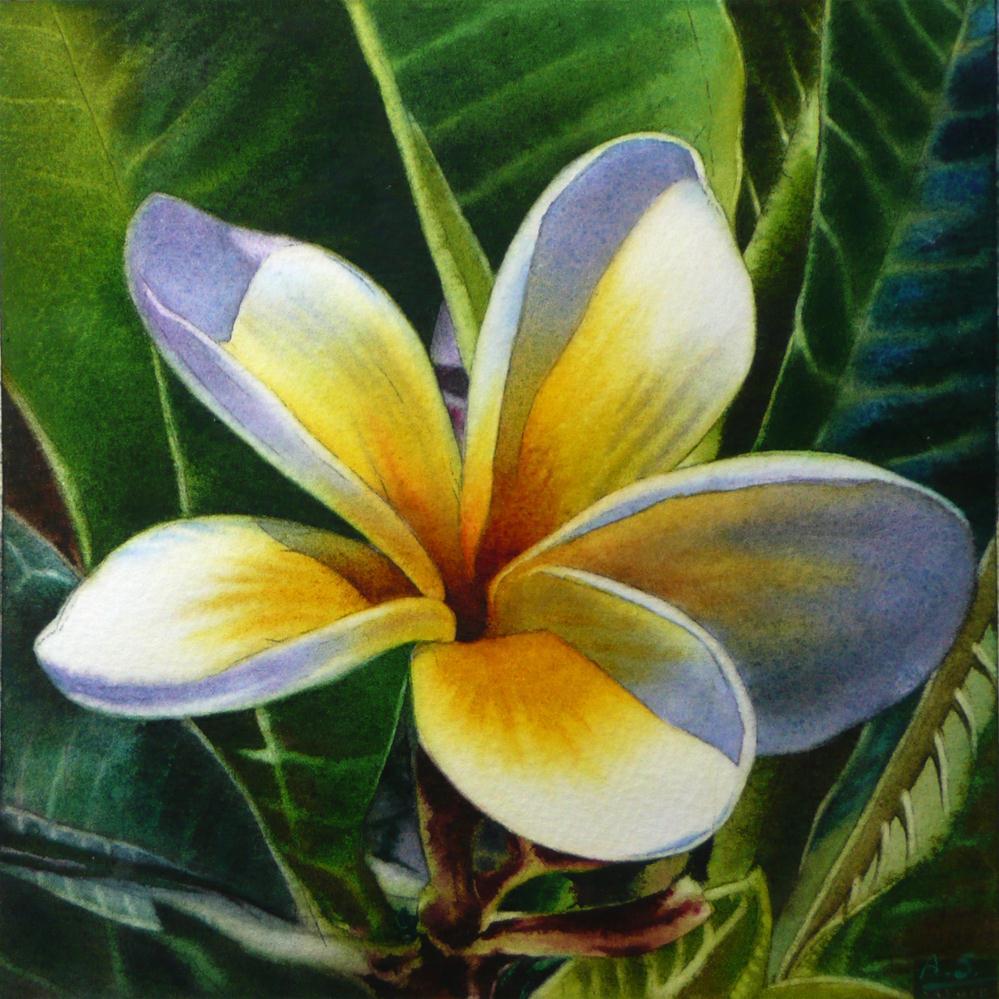 """Island Beauty - White Plumeria"" original fine art by Arena Shawn"