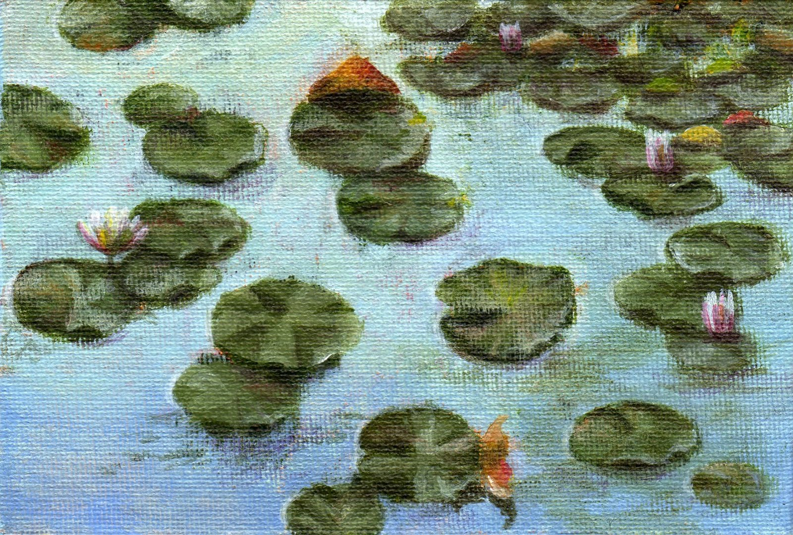 """""""Early Morning Water Lilies"""" original fine art by Debbie Shirley"""