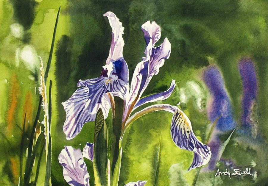 """Wild Iris"" original fine art by Andy Sewell"