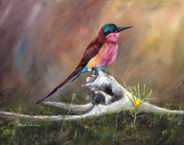 """Carmine Bee Eater No 3"" original fine art by Janet Graham"