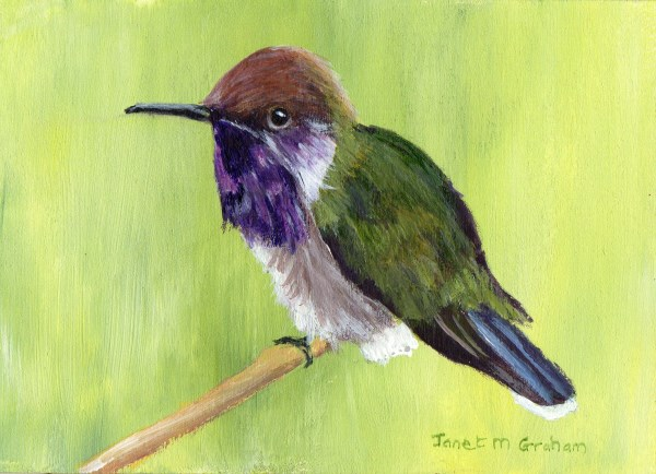 """Bumblebee Hummingbird ACEO"" original fine art by Janet Graham"