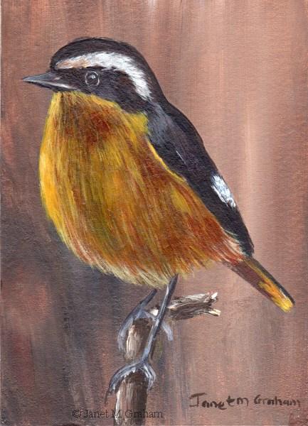 """Moussier's Redstart ACEO"" original fine art by Janet Graham"