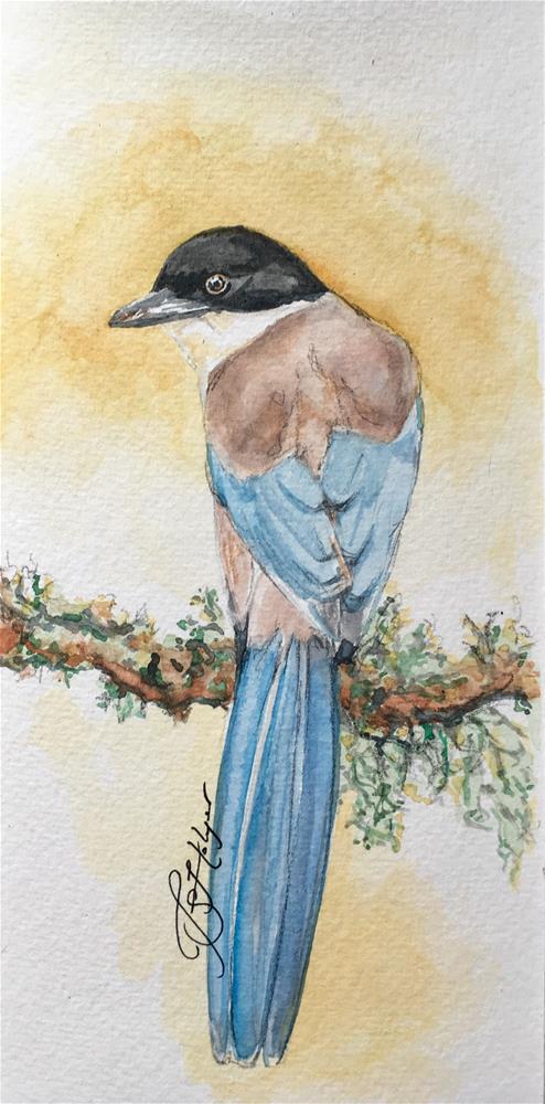 """Azure-winged Magpie"" original fine art by Jen Holyer"
