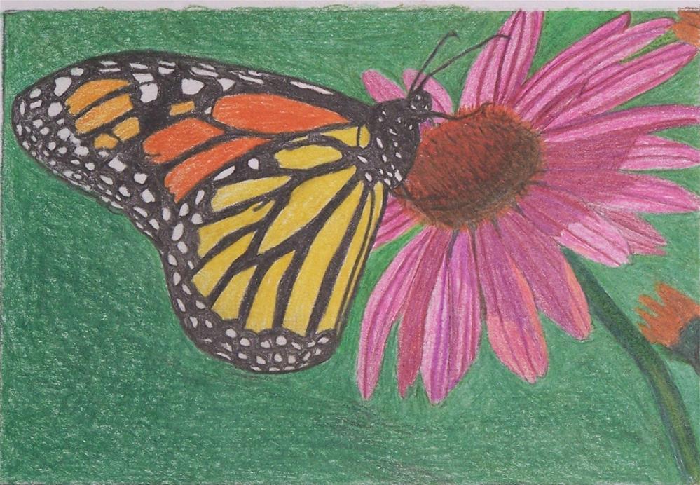 """Monarch on a flower"" original fine art by John Marcum"