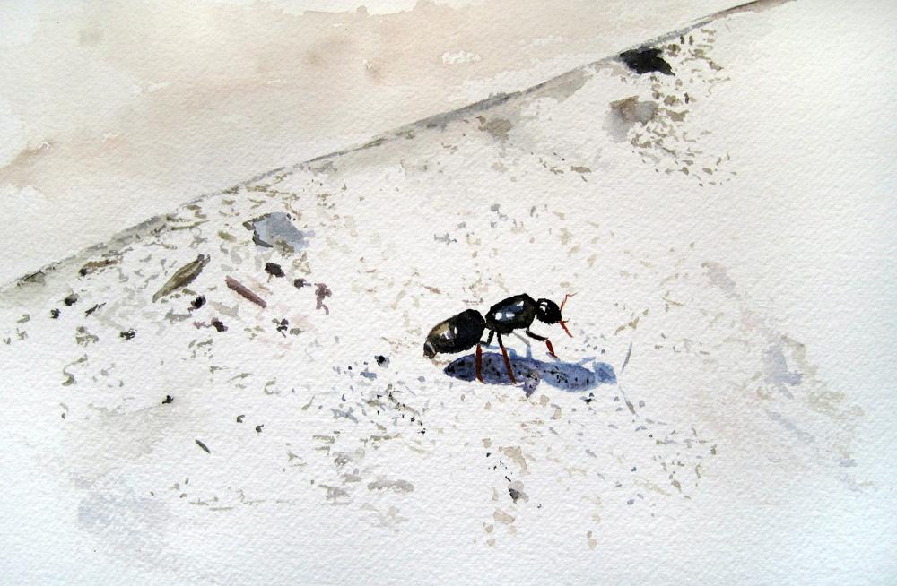 """Ant"" original fine art by Ulrike Miesen-Schuermann"
