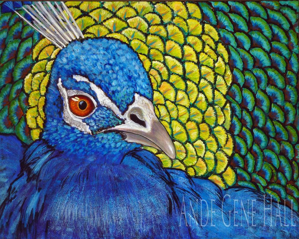 """Peacock Portrait"" original fine art by Ande Hall"