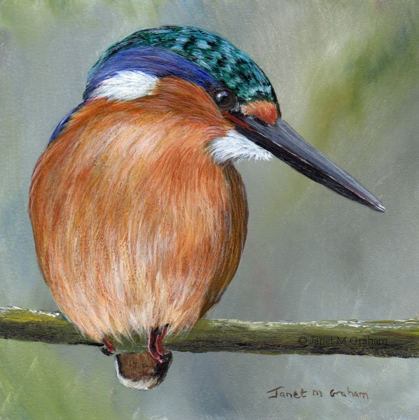 """Malachite Kingfisher No 5"" original fine art by Janet Graham"
