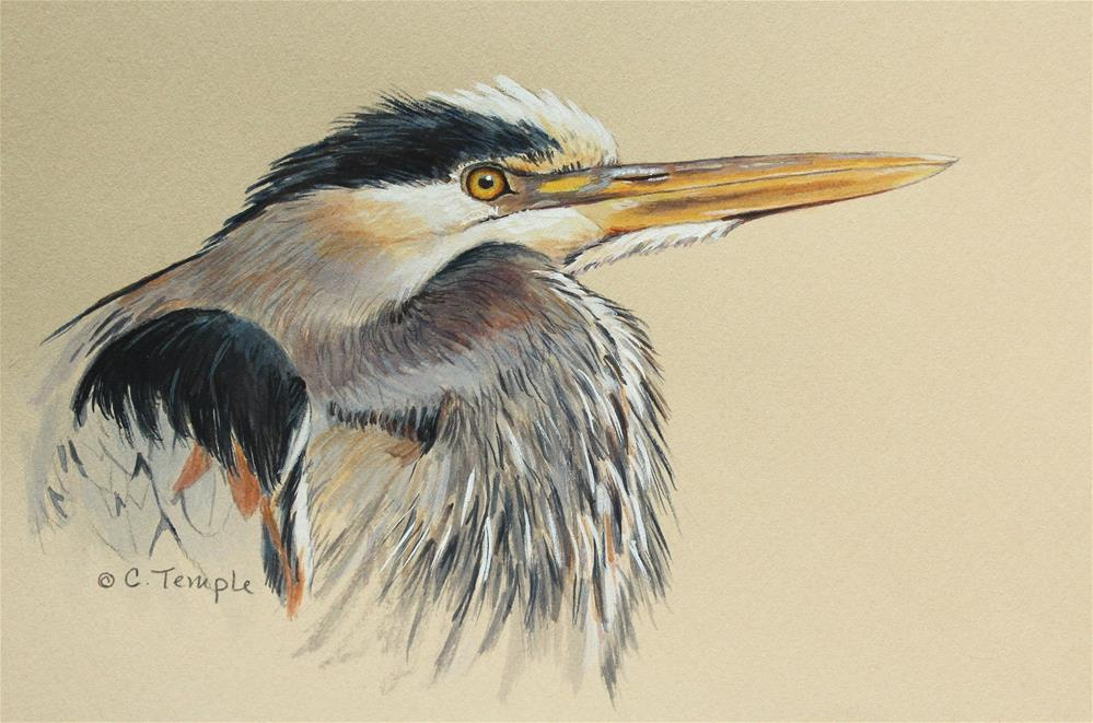 """Great Blue Heron"" original fine art by Catherine Temple"