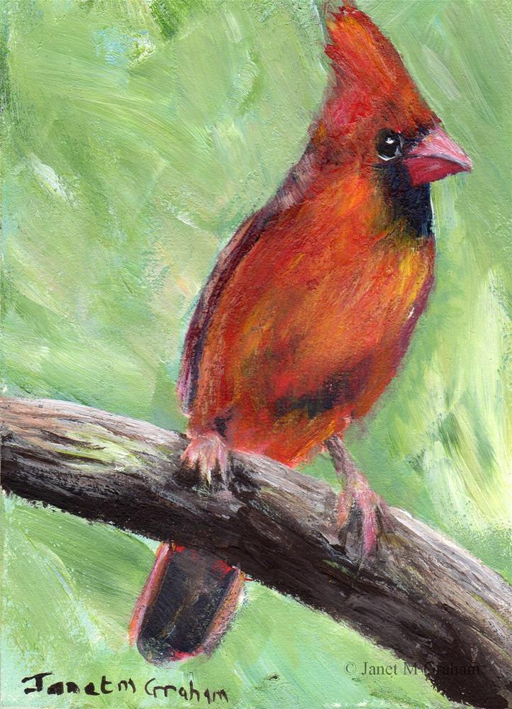 """Cardinal ACEO"" original fine art by Janet Graham"