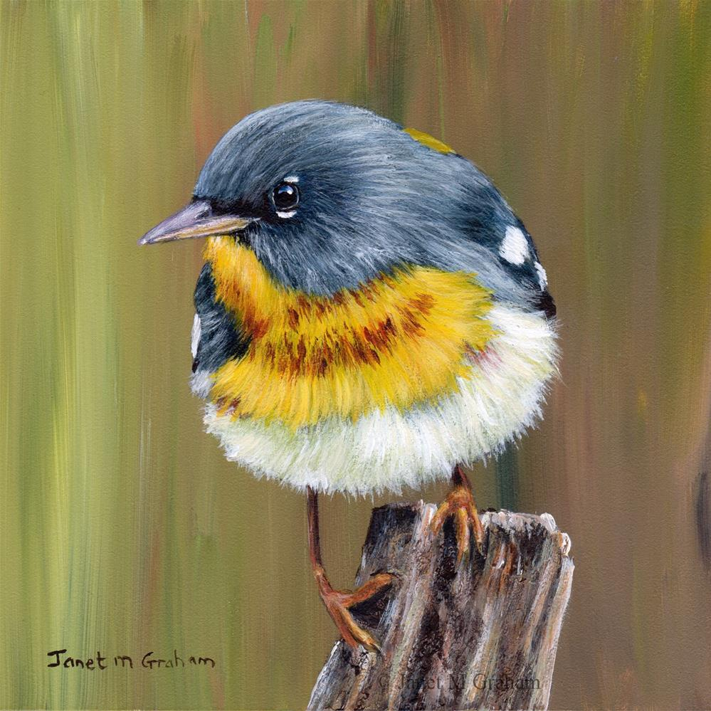 """Northern Parula"" original fine art by Janet Graham"