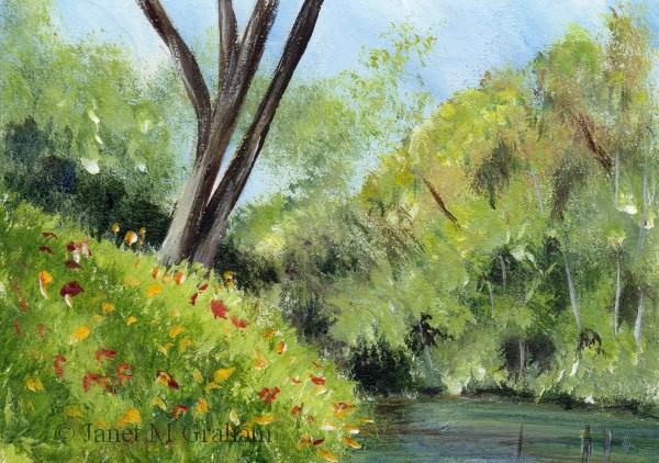 """River Bank ACEO"" original fine art by Janet Graham"