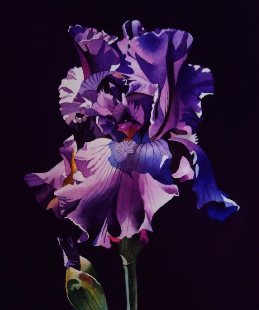 """Iris - Shades of Purple"" original fine art by Jacqueline Gnott, TWSA, WHS"