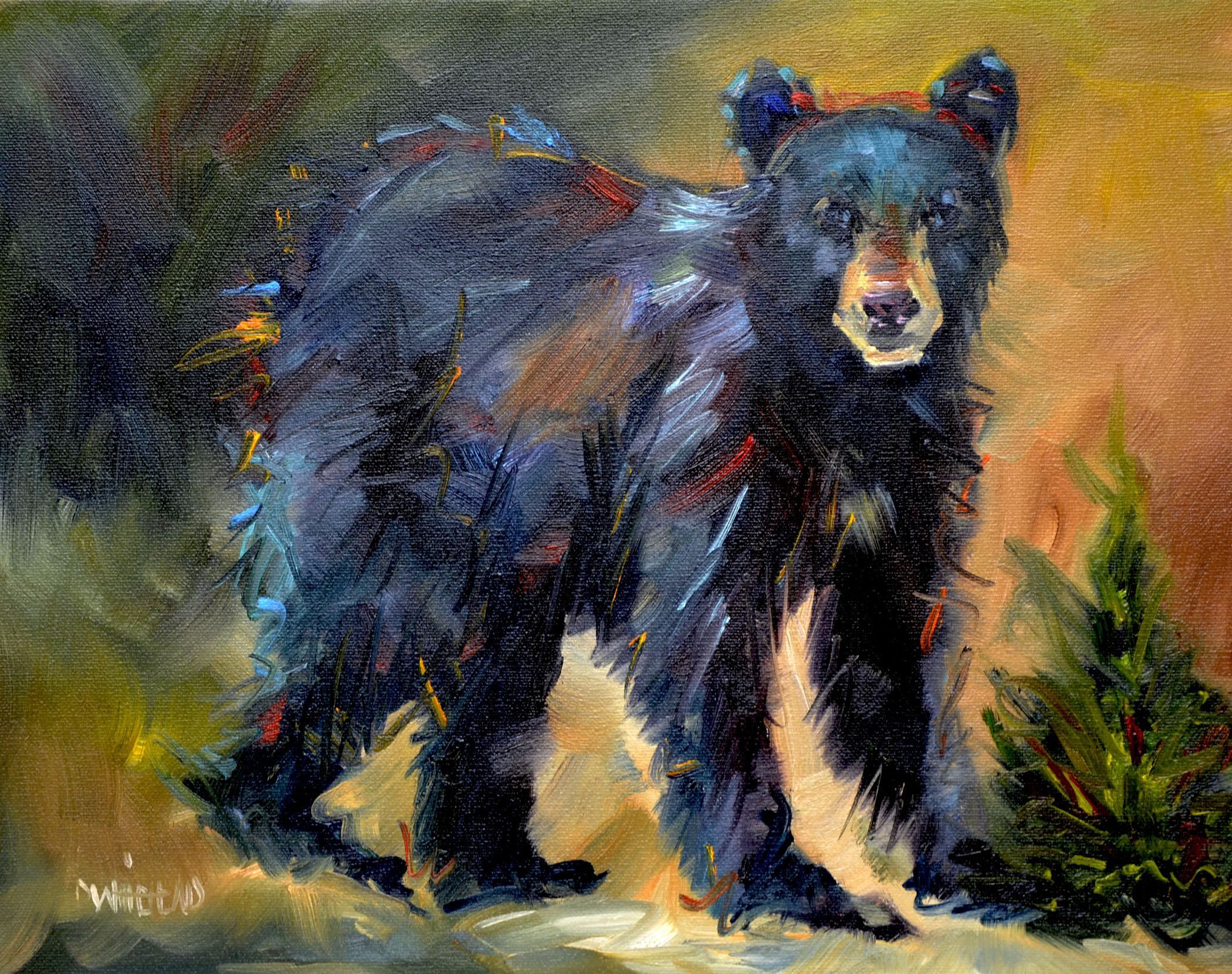 """Little Black Bear"" original fine art by Diane Whitehead"