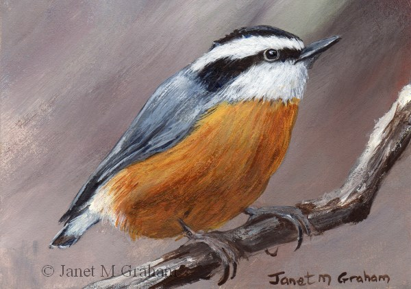 """Red Breasted Nuthatch ACEO"" original fine art by Janet Graham"