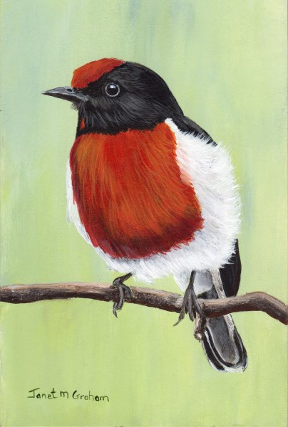 """Red Capped Robin"" original fine art by Janet Graham"