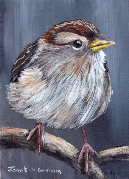 """White Crowned Sparrow ACEO"" original fine art by Janet Graham"