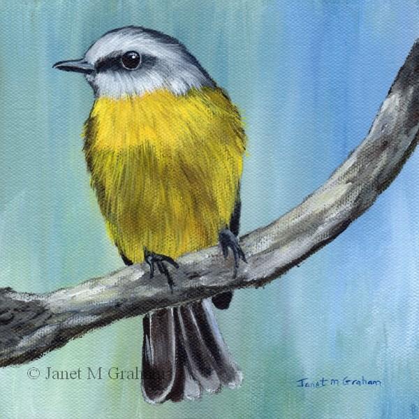 """Eastern Yellow Robin"" original fine art by Janet Graham"