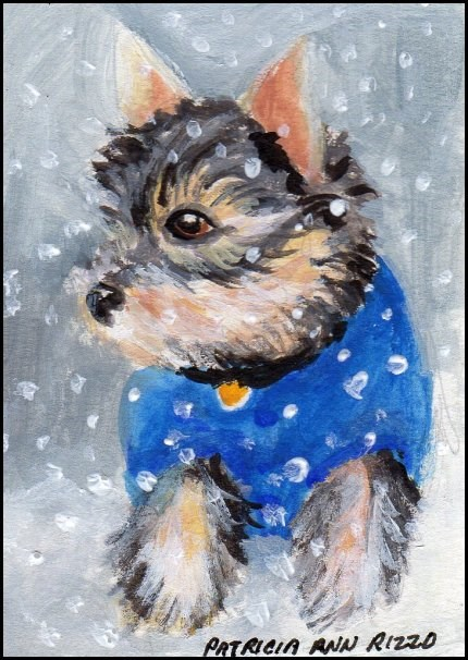 """Little Yorkie in a Blue Coat"" original fine art by Patricia Ann Rizzo"